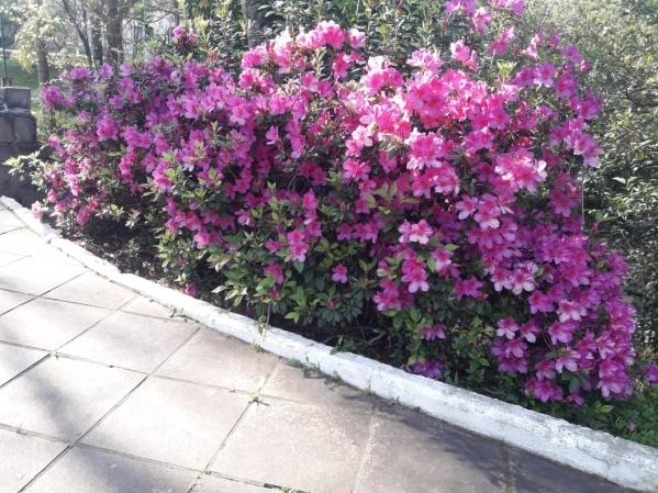 Flores anunciam a chegada da Primavera