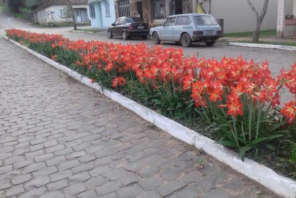 Ivorá reveste-se de flores, é a Primavera chegando...