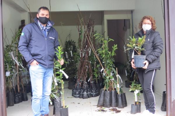 Emater de Ivorá entrega mudas de árvores frutíferas e ornamentais